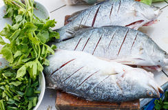 Raw seabass with herbs Stock Photography