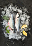 Raw seabass with lemon and rosemary on chipped ice over dark stone backdrop Royalty Free Stock Images