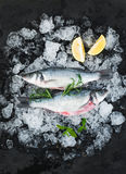 Raw seabass with lemon and rosemary on chipped ice over dark stone backdrop. Top view Stock Images
