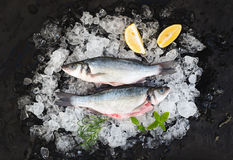 Raw seabass with lemon and rosemary on chipped ice over dark stone backdrop Stock Image