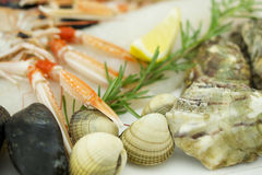Raw seafood Stock Image