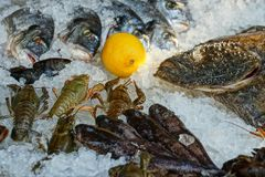 Raw seafood with crayfish and fish and lemon on ice stock images