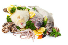 Raw Seafood Display. Fresh raw seafood display with oysters and squid on a white background Stock Photo