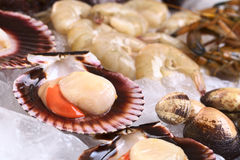Raw Seafood on Ice. Raw queen scallops (lat. Aequipecten opercularis) and other seafood such as mussels and prawns on ice (Selective Focus, Focus the front of Royalty Free Stock Photos