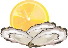 Raw seafood open oysters.  stock illustration