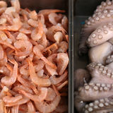 Raw seafood for sale. Photo closeup of natural fresh edible raw shrimps and cephalopods seafood marine animals displayed for sale on metal background, square Stock Photo