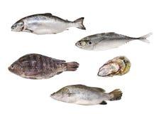 Raw seafood series - royalty free stock photos