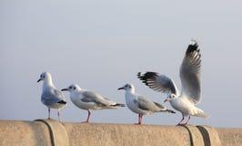 Raw Seagull on pillar Stock Image