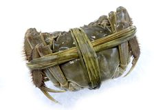 Raw shanghai hairy crab. On white background Royalty Free Stock Photography