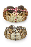 Raw shanghai hairy crabs(male and female) Stock Image