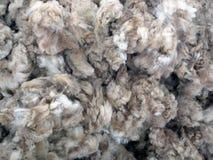 Raw Sheared Sheep Wool Royalty Free Stock Photos
