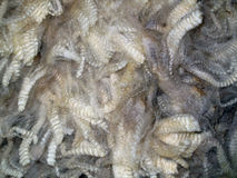 Raw Sheared Sheep Wool Stock Photo