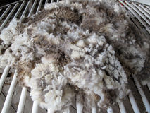 Raw Sheared Sheep Wool Stock Images