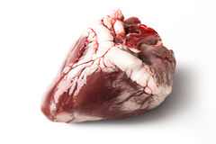 Raw sheep heart isolated on a white background Stock Photography