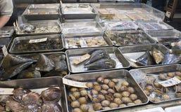 Raw Shellfish. Assorted shellfish for sale at the Tsukiji Stock Photography