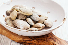 Raw Shells vongole in ceramic colander stock image