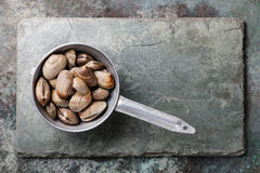 Raw Shells vongole in colander Royalty Free Stock Photos