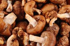 Raw Shiitake mushrooms. Royalty Free Stock Images