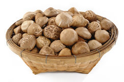 Raw shiitake mushrooms Stock Image