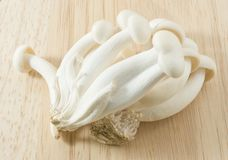 Raw Shimeji Mushroom on A Wooden Cutting Board Royalty Free Stock Photo