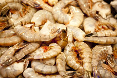 Raw Shrimp Stock Image