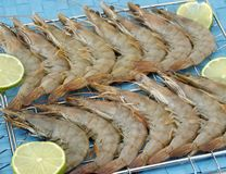 Raw Shrimp Stock Images