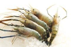 Raw shrimp Royalty Free Stock Image