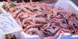 Raw shrimp Royalty Free Stock Images