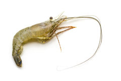Raw shrimp. Stock Photos