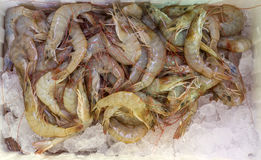 Raw shrimp in foam box Stock Photography