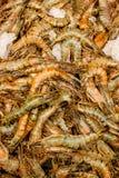 Raw shrimp on ice. Background Royalty Free Stock Image