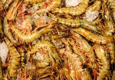 Raw shrimp on ice. Background Stock Image