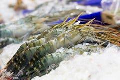 Raw shrimp on ice in the market. Stock Photos