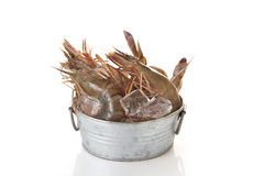 Raw shrimp and ice Royalty Free Stock Photography