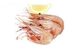 Raw Shrimp Isolated on White Stock Photography