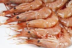 Raw Shrimp Isolated on White Stock Photo
