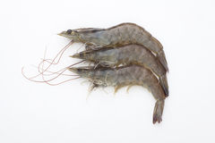 Raw shrimp Royalty Free Stock Image