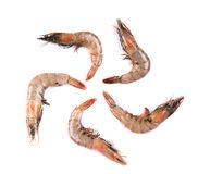 Raw shrimp isolated on a white background. Some raw shrimp isolated on a white background Stock Photography
