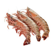 Raw shrimp Stock Photography