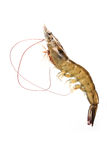 Raw shrimp Royalty Free Stock Photos