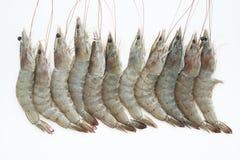 Raw shrimp isolated on white Royalty Free Stock Images