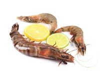 Raw shrimp with lemon and limes Stock Photos