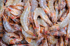 Raw shrimp at market Stock Photography