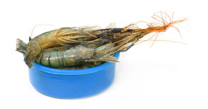 Raw Shrimp on a plastic bowl Stock Images