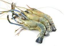 Raw shrimp. Three raw shrimp on white background Royalty Free Stock Photo