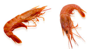 Raw shrimp in a white background Stock Photos