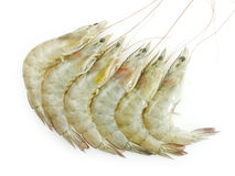 Raw Shrimps. On white background Stock Image