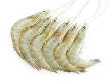 Raw Shrimps Stock Image