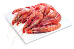 Raw shrimps Royalty Free Stock Photos