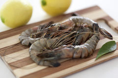 Raw Shrimps Stock Images